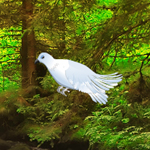 WOW White Pigeon Forest Escape