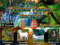 BIG Vibrant Forest Escape