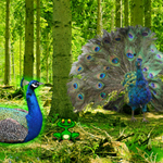Peafowl Forest Escape