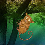 Tarsier Fantasy Forest Escape