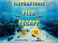 Elephantnose Fish Escape