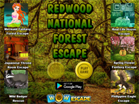 WOW Redwood National Forest Escape