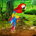 G2R Scarlet Macaw Forest Escape